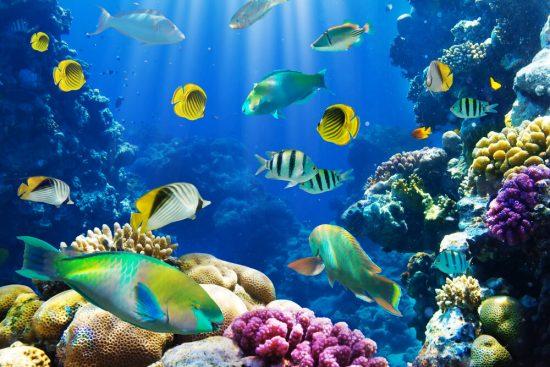 Sortides escolars aquarium