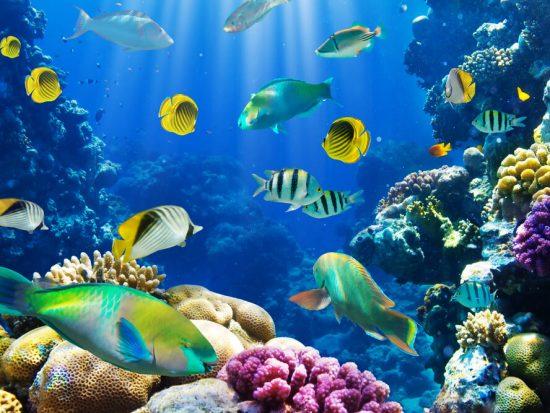 Salidas Escolares aquarium barcelona
